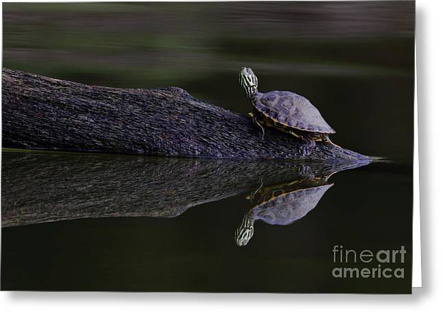 Greeting Card featuring the photograph Abstract Turtle by Douglas Stucky