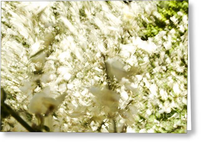 Abstract White Greeting Card by Ray Laskowitz - Printscapes