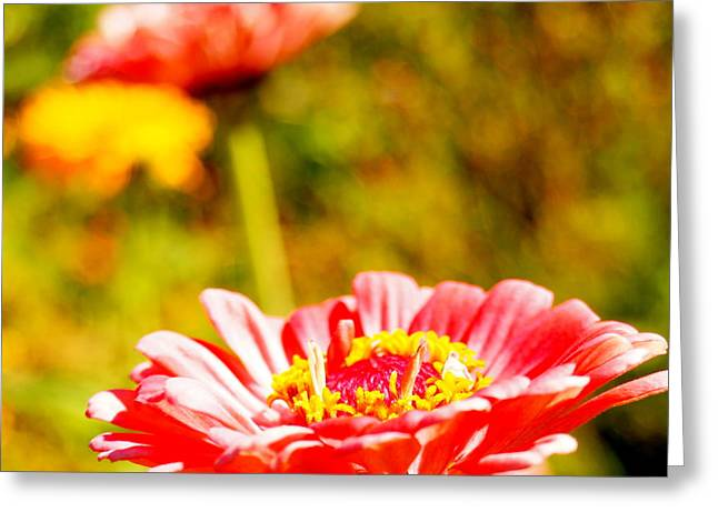 Abstract Zinnia Greeting Card by Beth Collins