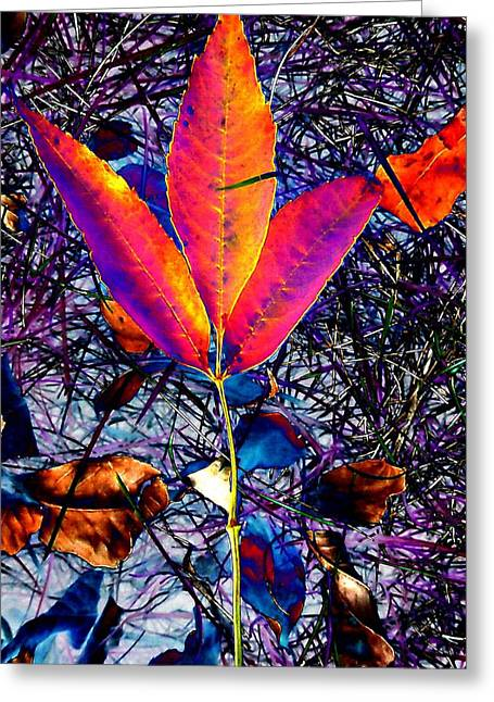 Abstracted Fall Leaves Greeting Card by Beth Akerman