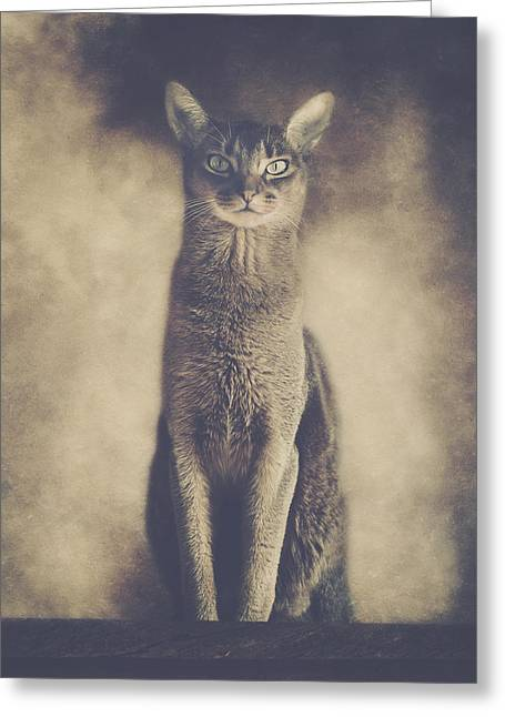 Abyssinian Cat Portrait 2 Greeting Card