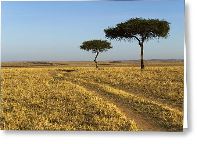 Eco-tourism Greeting Cards - Acacia Trees In The Maasai Mara Greeting Card by Nigel Hicks
