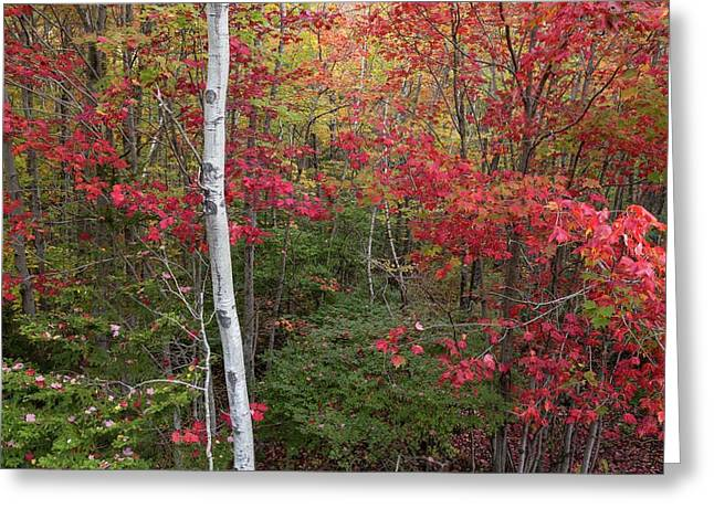 Greeting Card featuring the photograph Acadia Fall Colors by Paul Schultz