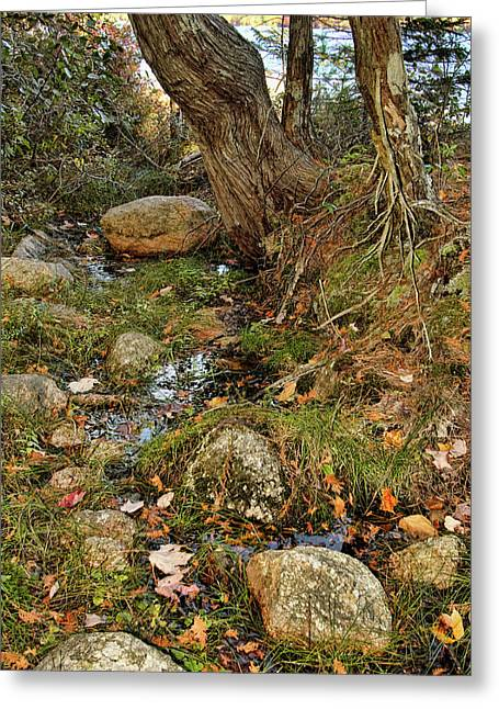 Acadia Fall Foliage Greeting Card by Alexander Mendoza