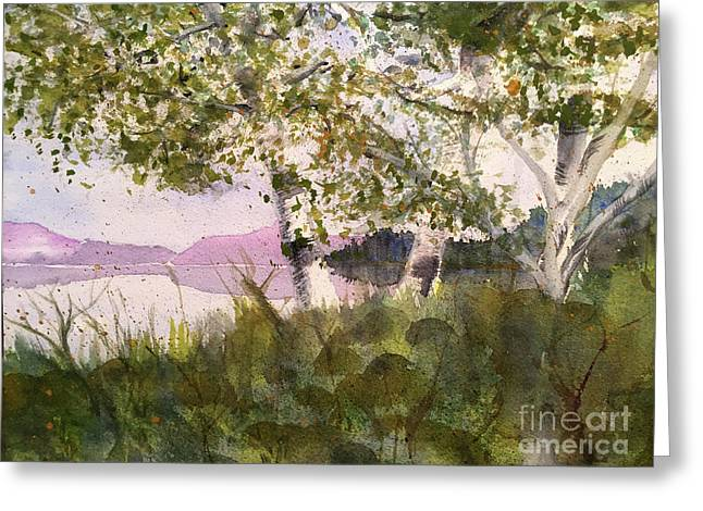 Acadia Morning Greeting Card by Maura Satchell
