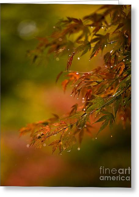 Acer Jewels Greeting Card by Mike Reid