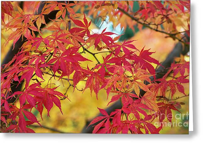 Autumn Fire Greeting Card by Tim Gainey
