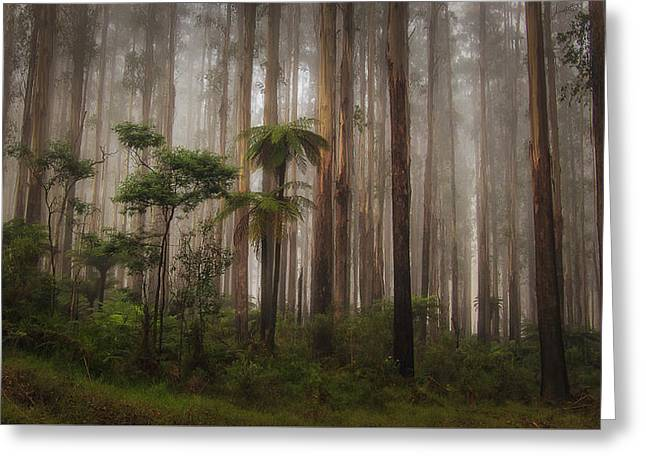 Greeting Card featuring the photograph Acheron Way by Tim Nichols