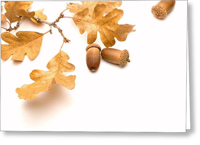 Acorns And Oak Leaves Greeting Card by Utah Images