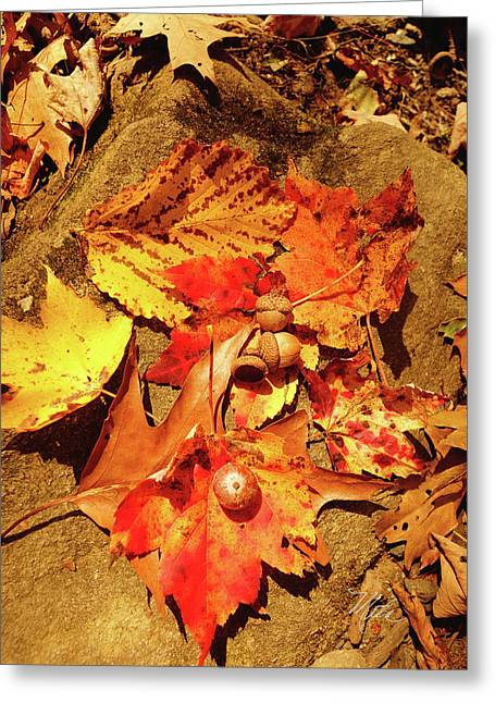 Greeting Card featuring the photograph Acorns Fall Maple Leaf by Meta Gatschenberger
