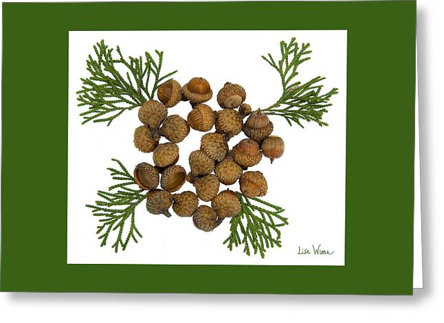 Acorns With Cedar Greeting Card by Lise Winne