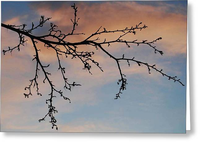 Across A December Sky Greeting Card by Marilynne Bull