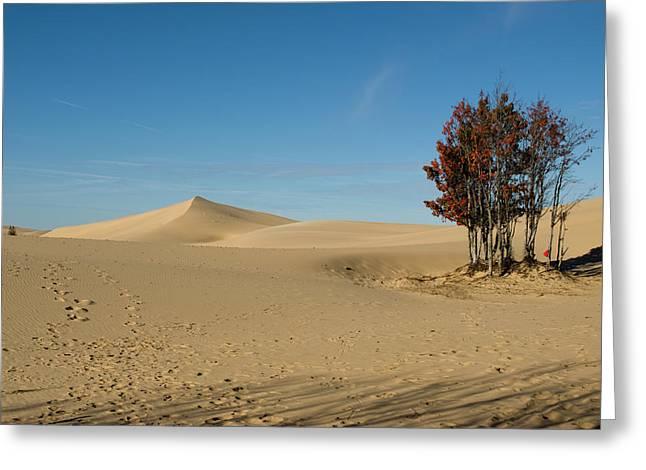 Greeting Card featuring the photograph Across The Sand 2 by Tara Lynn