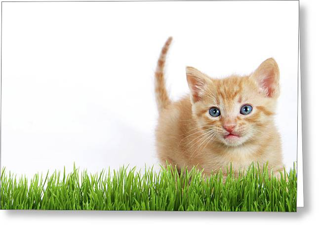 Active Orange Ginger Kitten  Greeting Card