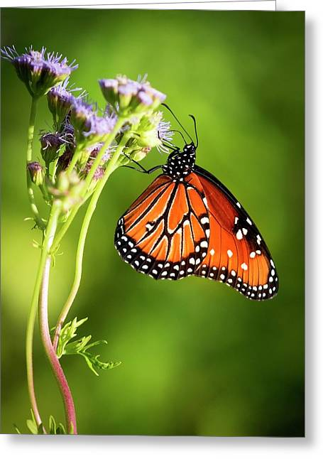 Addicted Queen Butterfly Greeting Card