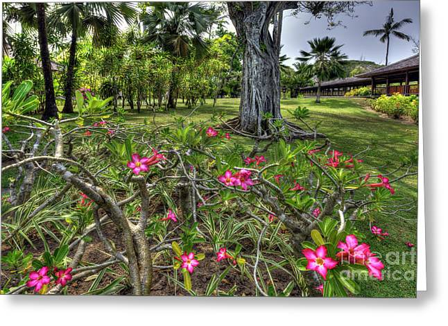 Adenium Flower - Bali Greeting Card by Kevin Oconnell