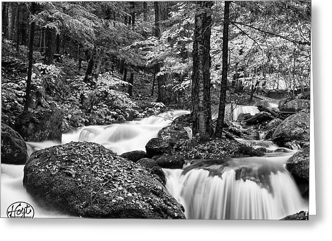 Adirondack Stream Greeting Card by Brad Hoyt