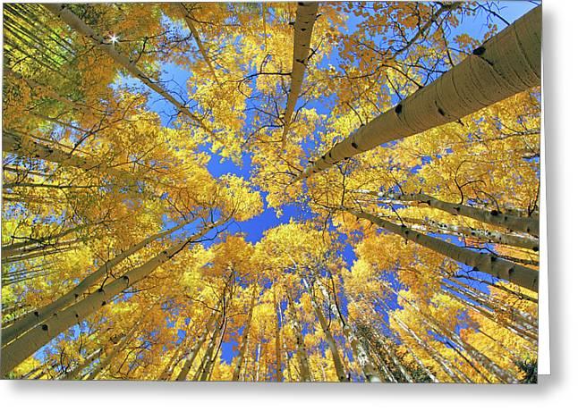 Admiring Aspens - Colorado - Autumn Greeting Card by Jason Politte