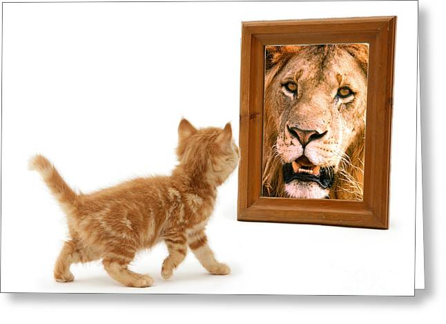 Admiring The Lion Within Greeting Card