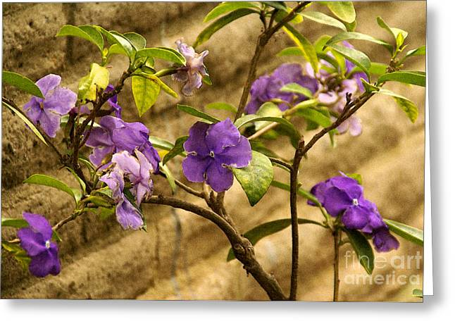 Greeting Card featuring the photograph Adobe Garden Wall by Linda Shafer