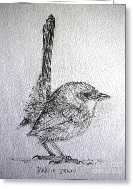 Adolescent Blue Wren Greeting Card by Sandra Phryce-Jones