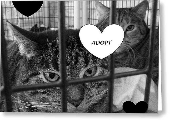 Adopt Greeting Card