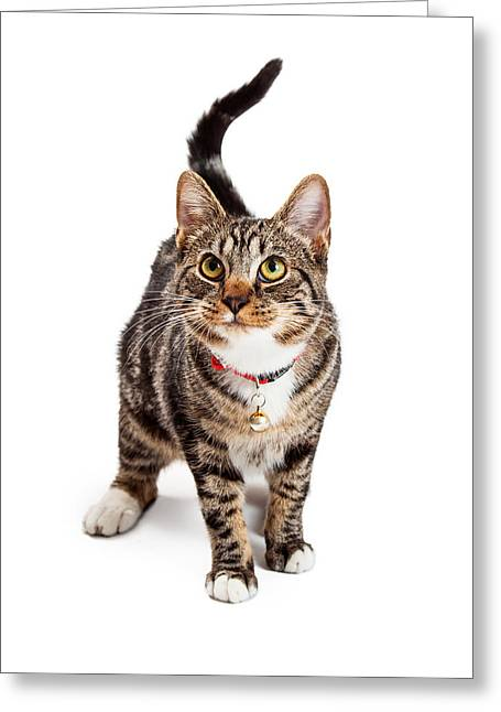 Adorable Bengal Cat With Attentive Expression Greeting Card by Susan Schmitz