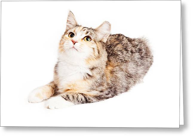 Adorable Calico Kitty Looking Up Greeting Card by Susan Schmitz