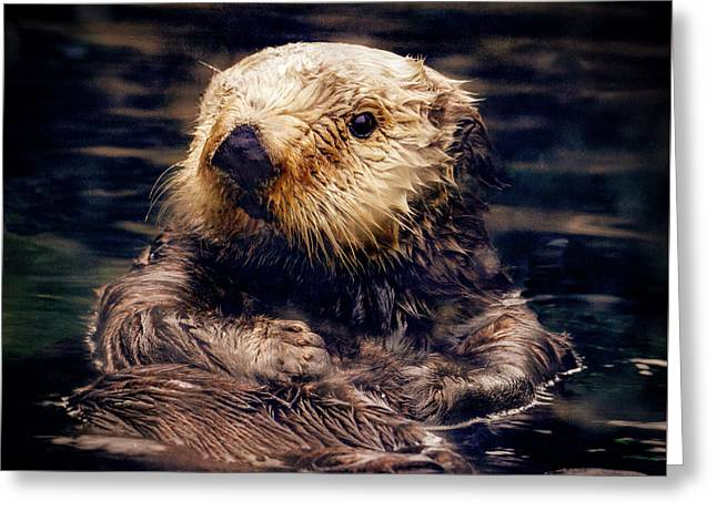 Adorable Sea Otter Greeting Card by Jean Noren