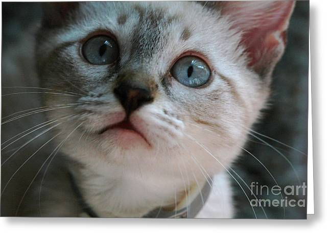 Greeting Card featuring the photograph Adorable Kitty  by Kim Henderson