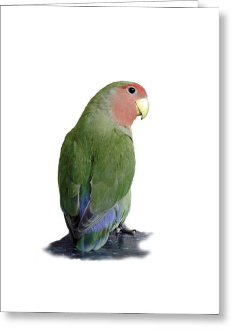 Adorable Pickle On A Transparent Background Greeting Card by Terri Waters
