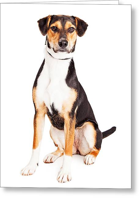 Adorable Young Mixed Breed Puppy Dog Greeting Card by Susan Schmitz