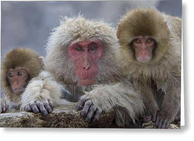 Adult And Two Young Greeting Card by Roy Toft