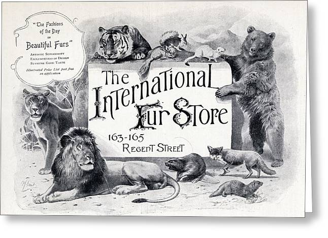 Advertisement For The International Fur Greeting Card by Vintage Design Pics