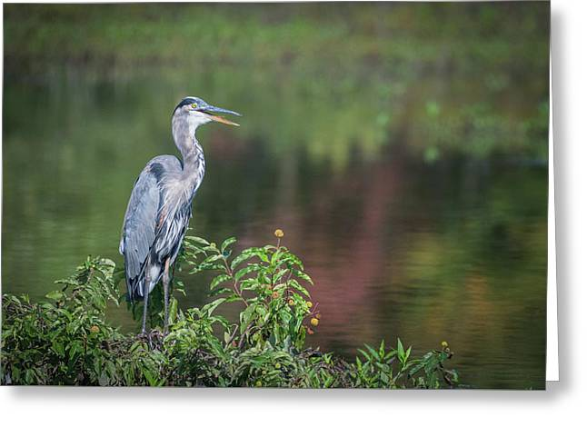 Greeting Card featuring the photograph Advice From A Great Blue Heron by Cindy Lark Hartman