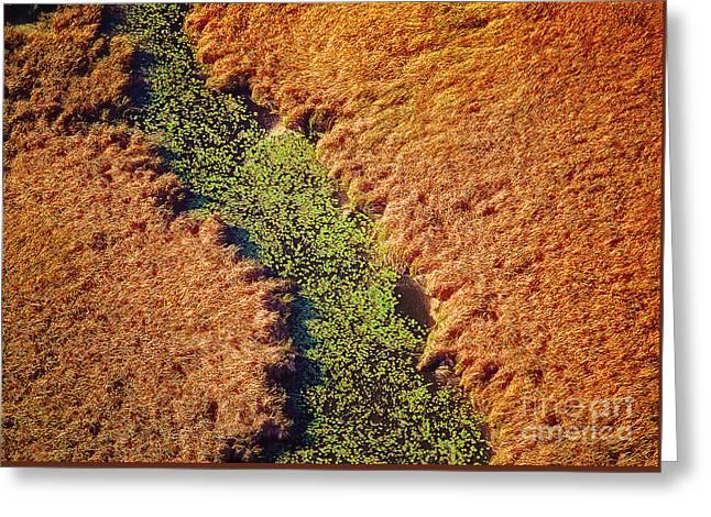 Aerial Farm Stream Lillies  Greeting Card