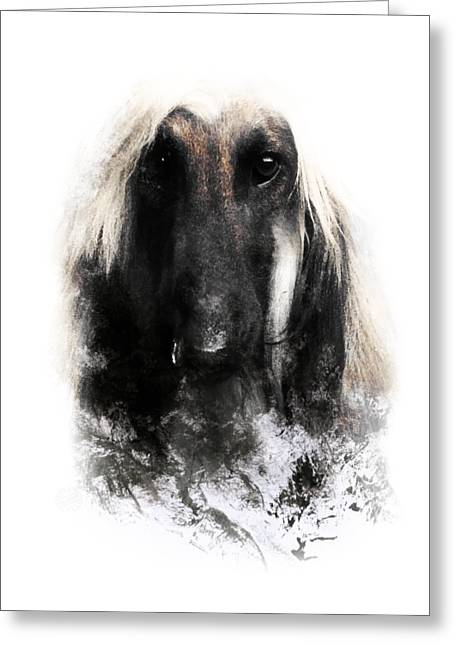 Afghan Dog Greeting Cards (Page #6 of 7) | Fine Art America