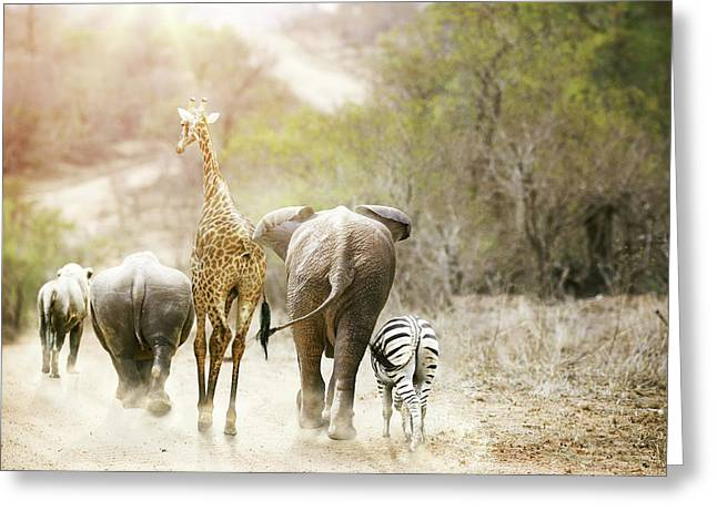 Africa Safari Animals Walking Down Path Greeting Card