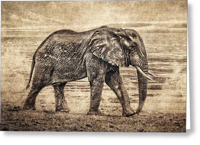 Africa Series - Elephant Greeting Card by Brett Pfister