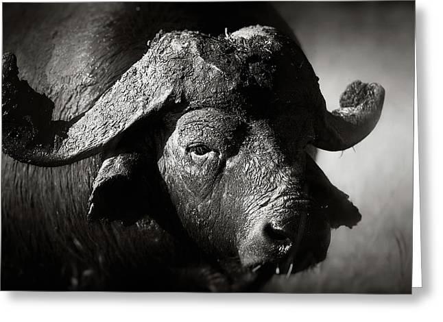 African Buffalo Bull Close-up Greeting Card