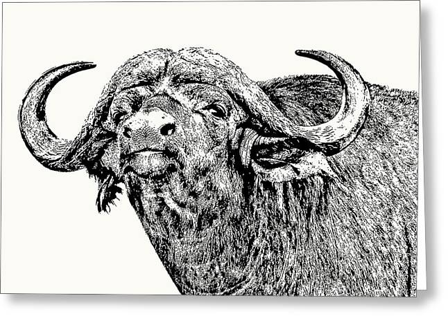 African Buffalo Bull Portrait Greeting Card