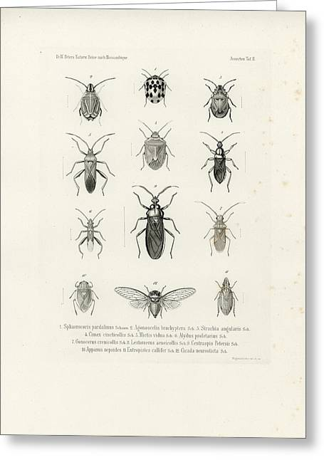 African Bugs And Insects Greeting Card