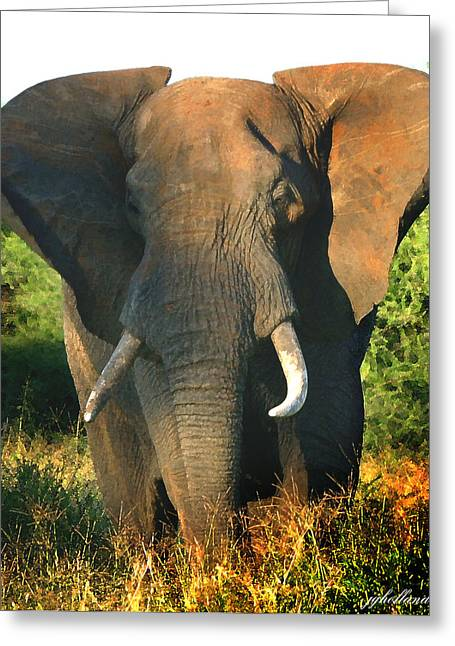 African Bull Elephant Greeting Card