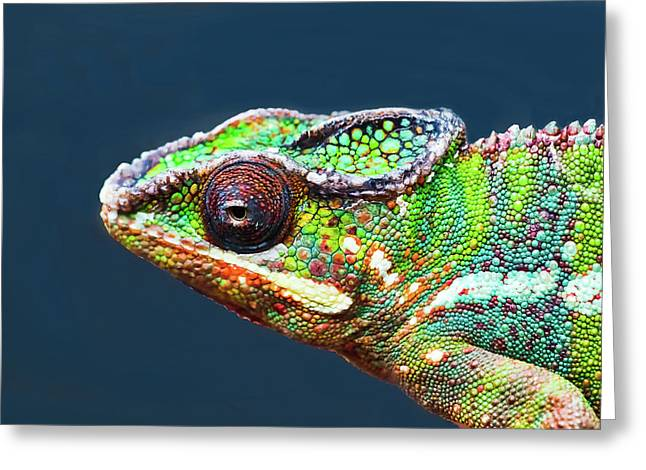 Greeting Card featuring the photograph African Chameleon by Richard Goldman