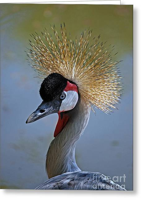 African Crown Greeting Card by Skip Willits