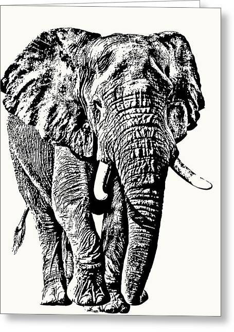 African Elephant Bull, Full Figure Greeting Card
