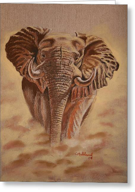 African Elephant Greeting Card by Charles Hubbard