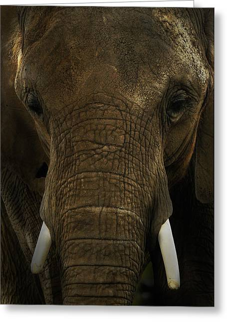 Greeting Card featuring the photograph African Elephant by Michael Cummings