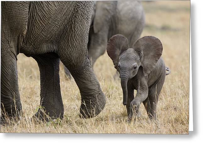 African Elephant Mother And Under 3 Greeting Card