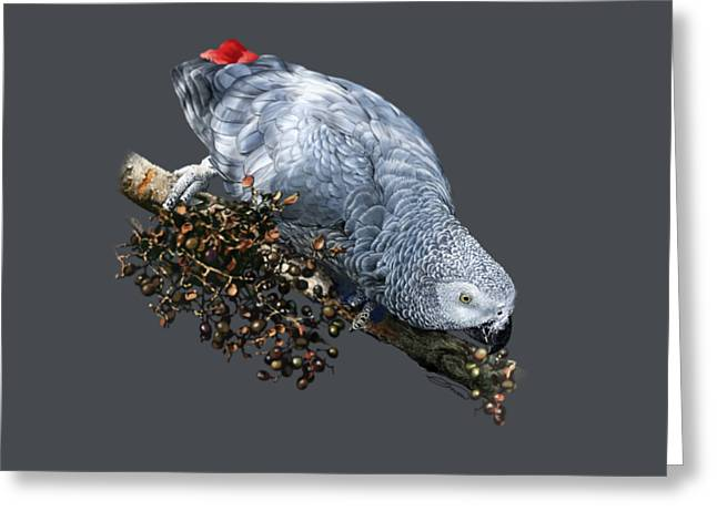 African Grey Parrot A Greeting Card by Owen Bell